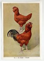 Fort - Hanen En Hennen - Coqs Et Poules - Roosters And Hens, Kippen, Poulets, Chickens - 52 - Unclassified