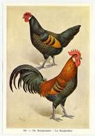 Fort - Hanen En Hennen - Coqs Et Poules - Roosters And Hens, Kippen, Poulets, Chickens - 60 - Unclassified