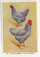 Fort - Hanen En Hennen - Coqs Et Poules - Roosters And Hens, Kippen, Poulets, Chickens - 65 - Unclassified