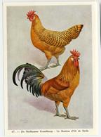 Fort - Hanen En Hennen - Coqs Et Poules - Roosters And Hens, Kippen, Poulets, Chickens - 67 - Unclassified