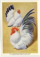Fort - Hanen En Hennen - Coqs Et Poules - Roosters And Hens, Kippen, Poulets, Chickens - 69 - Unclassified
