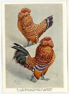 Fort - Hanen En Hennen - Coqs Et Poules - Roosters And Hens, Kippen, Poulets, Chickens - 70 - Unclassified