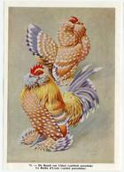 Fort - Hanen En Hennen - Coqs Et Poules - Roosters And Hens, Kippen, Poulets, Chickens - 71 - Unclassified