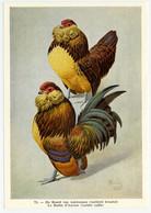 Fort - Hanen En Hennen - Coqs Et Poules - Roosters And Hens, Kippen, Poulets, Chickens - 72 - Unclassified