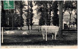 95 LA ROCHE-GUYON - Boeufs Nivernais Au Paturage - La Roche Guyon