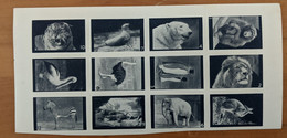 Cinderella Poster Stamps Great Britain Animals Of London Zoo Set Of 12 MNH Imper - Local Issues