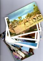 Lot AFRIQUE  - 30 CP D'AFRIQUE (Déstockage) - 5 - 99 Postales