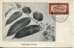 62042  Egypt, Maximum 21.3.1938 (first Day Postmark)congres Int. De La Lepre,Lepra Kongress,leprosy Congress, RR - Storia Postale