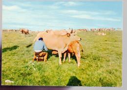 REF 540 : CPSM Vache Cow La Traite Sur L'Aubrac - Kühe