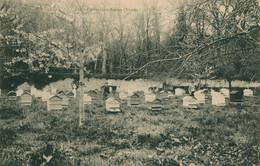 CPA RARE - Un Rucher à Nesmy - Abeilles - Apiculture Animée Non Circulée - Other Municipalities