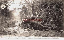 CPA FONTAINEBLEAU - SEINE ET MARNE - FEU DE FORET 1904 - LE CLOVIS DETRUIT PAR L'INCENDIE - Fontainebleau