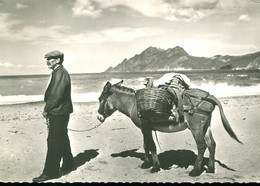 Golfe De Porto - Type Corse (Ane) - Donkeys