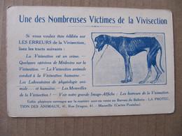 CPSM - UNE DES NOMBREUSES VICTIMES DE LA VIVISECTION - LIGUE DEFENSE DES ANIMAUX - DIJON - Dogs