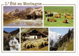 L'été En Montagne Troupeau De Vaches Et De Moutons éditions Edy - Crías