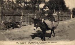 Tanger - Un Marocain Se Rendant Au Marché  ANE DONKEY EZEL ESEL MULES Donkeycollection - Tanger