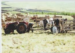 CPM 12 SAINT CHELY D'AUBRAC ... Calmejane, Après La Traite (Livenais 200789) Vaches Tracteur - Sonstige Gemeinden