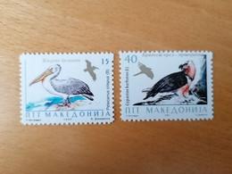 Pélican Aigle Gypaète Bird Vögel - Macedonia