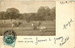 ROYAUME UNI  JERSEY ( Carte Photo) - Jersey