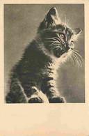 Animaux - Chats - Ernest Sans Pedigree - Extrait De L'album Chats Par Ylla - Carte Neuve - CPM - Voir Scans Recto-Verso - Katten