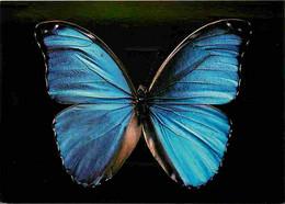 Animaux - Papillons - Papillon Morpho - Collection Du Muséum De Rouen - Voir Timbre - CPM - Voir Scans Recto-Verso - Butterflies