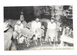 11944 - 12 - ROQUEFORT : La Traite Des Brebis, - Roquefort