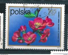 N° 2061  Fleurs Chaenomeles Lagenaria  Timbre Pologne (1972) Oblitéré Sur Neuf Polska 1.65 ZT - Oblitérés