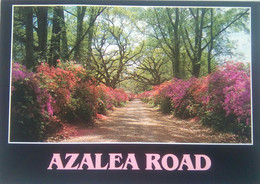 Azalea Road, Entrance To Highland Plantation - Other