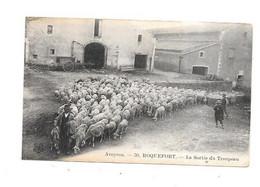 11946 - 12 - ROQUEFORT : La Sortie Du Troupeau - Roquefort
