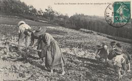 15  La Recolte Des Pommes De Terre - Unclassified