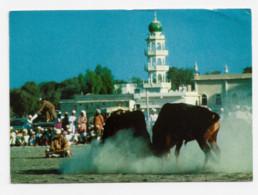 Oman, Bullfight In The Batinah - Oman