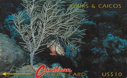TURKS Und CAICOS - Turks And Caicos Islands