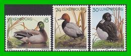 """BUZIN - Luxembourg - Y&T 1453/1455 - Série """"Les Canards"""" 2000 - 1985-.. Birds (Buzin)"""