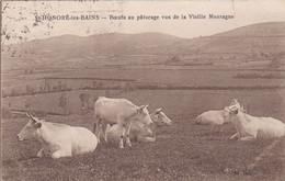 [58] Nièvre  Saint-Honoré-les-Bains Bœufs Au Pâturage Vus De La Vieille Montagne - Saint-Honoré-les-Bains