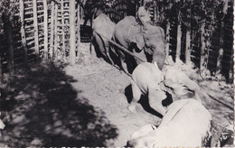 """Azië - Pakistan - The """"Elephant Khedda"""" - Zwart/wit - Gebruikt - Pakistán"""