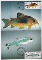 Brazil 1988 2 Maximum Card  Brazilian Freshwater Fishes Fauna Animal - Peces