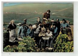 89 IRANCY #19237 VENDANGES VIGNES RECOLTE VINS - Andere Gemeenten