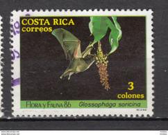 Costa Rica, Chauve-souris, Bat - Fledermäuse