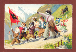 CHATS - Chats Humanisés - Künzli - Randonnée à La Montagne - Gatos