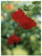 (HH 25) Micronesia - Native Flower (posted To Australia With 2 Flower Stamps 2018) - Micronesia