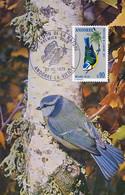 Carte Maximum Oiseau  Mésange Bleue 1973  Photo Fatras Bird - Andorra