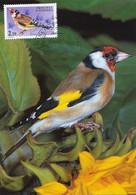 Carte Maximum Oiseau  Bird 1982   Carduelis - Andorra