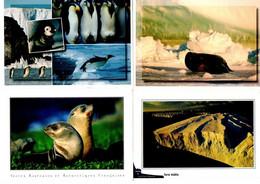 4 Cartes Postales : Thème Polaire. Cartes Envoyées Des TAAF, Phoque De Wedell, Iceberg, Manchots Empereurs, Phoques. - Sin Clasificación