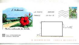 Pap Iguane Flamme Chiffrée Illustré Hibiscus - Prêts-à-poster: Other (1995-...)