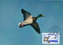 Maximum Card Macao Macau Canard Col Vert En Vol Villars Les Dombes  Bird Duck - China