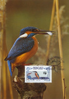 Maximum Card Macao Macau Martin Pecheur Kingfisher  Bird - China