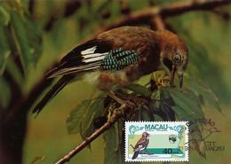 Maximum Card Macao Macau Geai Des Chenes Jay   Bird - China