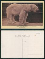 [ OT 01476 ]  - ANIMALS BEAR WHITE USRSUS MARITIMUS WEISSER BÄR - Bears