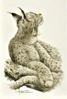 """Maximumkaart """"Lynx"""" Sepia - 1985-.. Birds (Buzin)"""