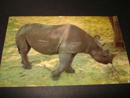 NEUSHOORN ...   ---    ( Lot   Ismo 17 -  INSECTEN +   ) - Rhinoceros