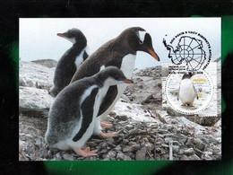 UKRAINE 2020 MC - Maximum Card Fauna Antarctica Penguin NEW! - Ukraine